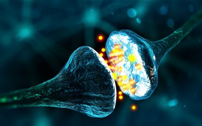 Synapse between two neurons neural synapse receptors neuron link neural network