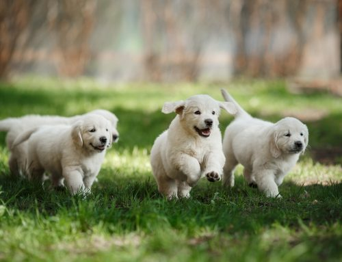 Early Socialization – How Socializing Your Pet Can Prevent Stress and Anxiety in the Future